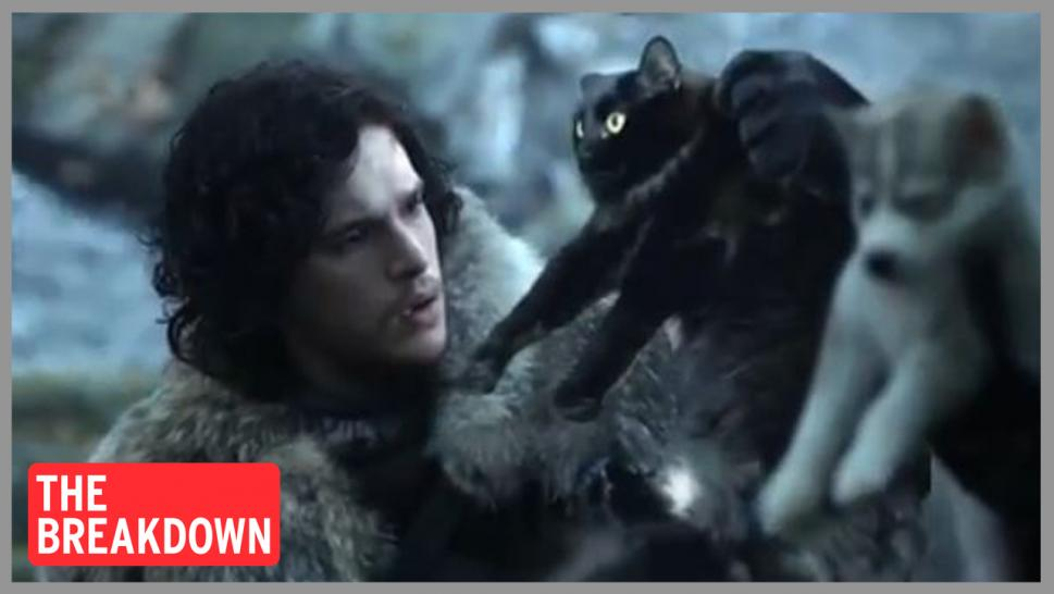 OwlKitty appears on Game of Thrones with Jon Snow