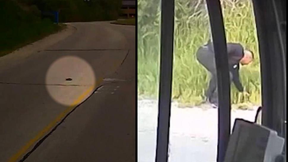 Bus driver saves turtle