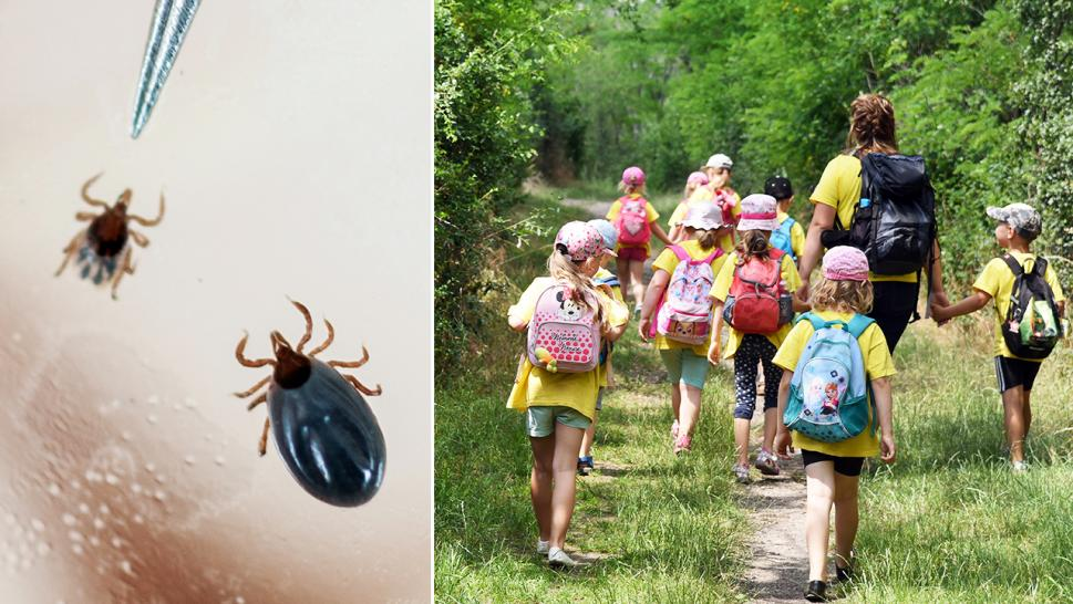 Tick-borne diseases have been on the rise in the last several years and experts offer advice on how to stay safe this summer.
