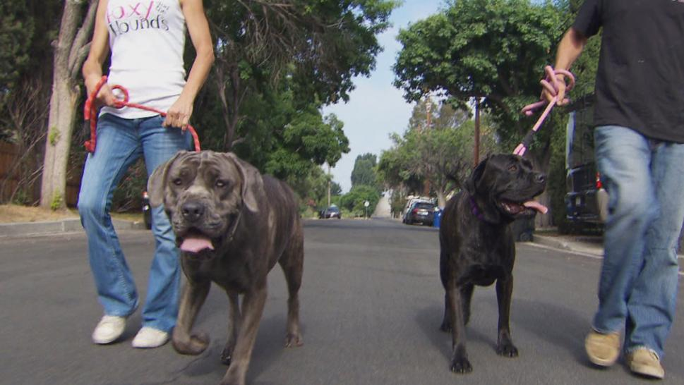 The two dogs involved in a wild RV chase have a new home.