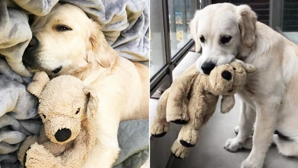 Barley never goes anywhere without his stuffed toy, Fluffy.