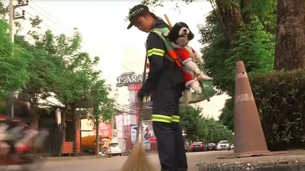 Street sweeper takes her dog to work every day