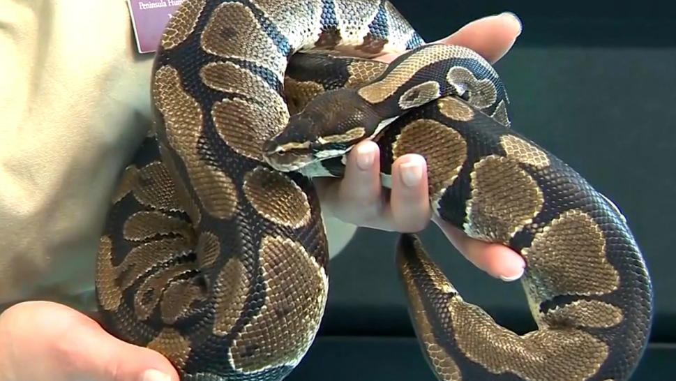 A snake is missing at Fond du Lac High School in Wisconsin.