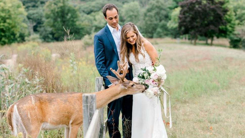 The deer walked right into a wedding photo shoot.