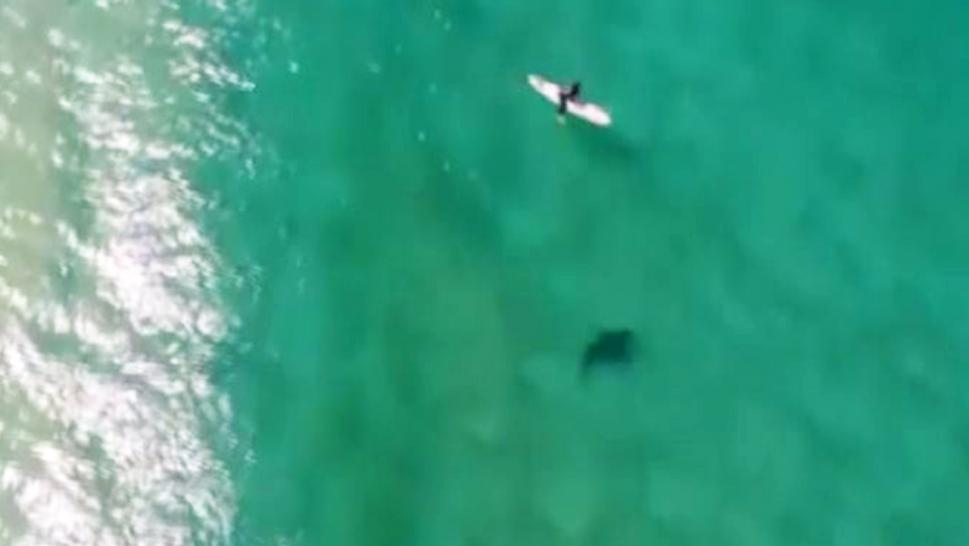 A surfer and a shark are seen swimming the same waters off Werri Beach in New South Wales, Australia.