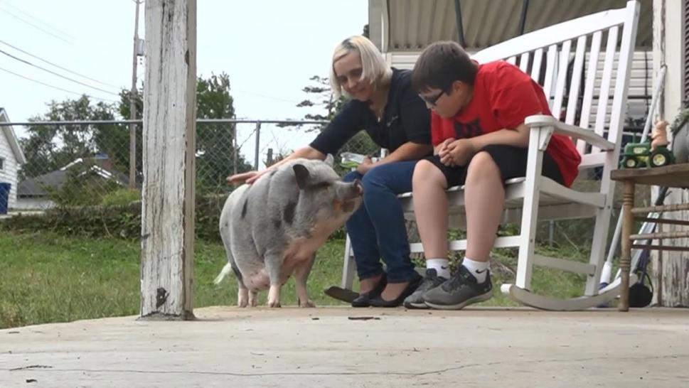 City Wants Family to Get Rid of Emotional Support Pig