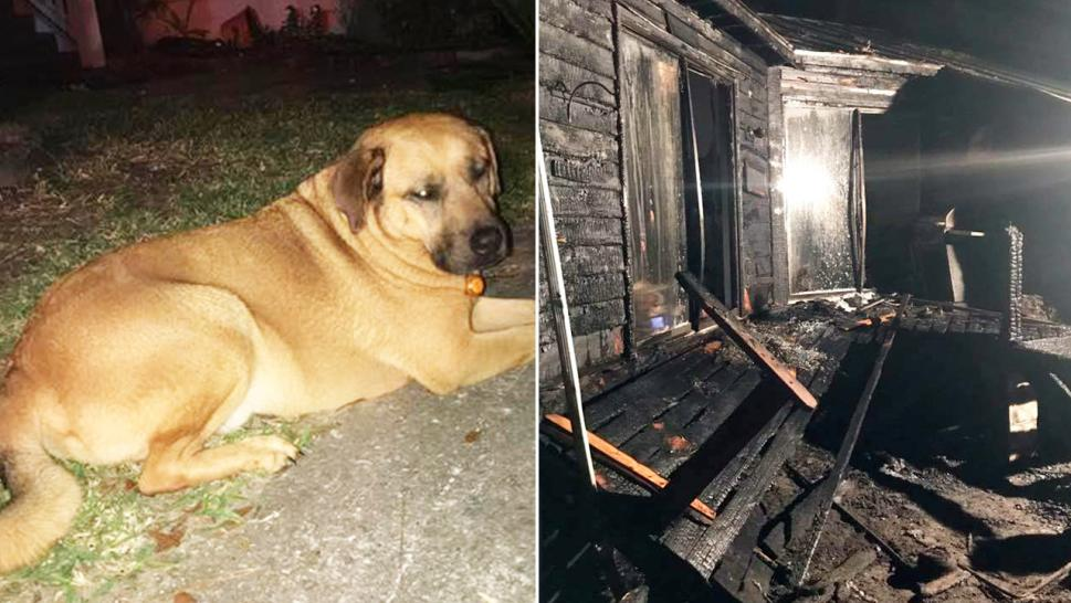 Curly rescued his owner from a devastating fire in the middle of the night.