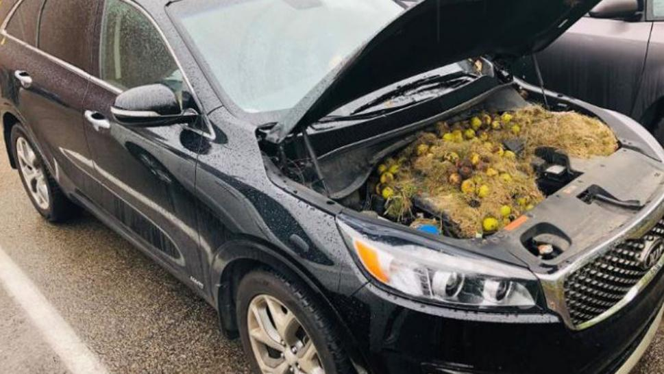 A Pittsburgh woman's car was taken over by squirrels.