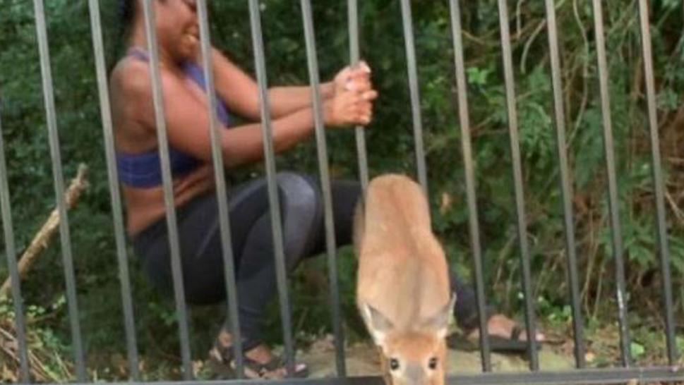 Chloe Dorsey rescued a deer caught in a fence — twice.
