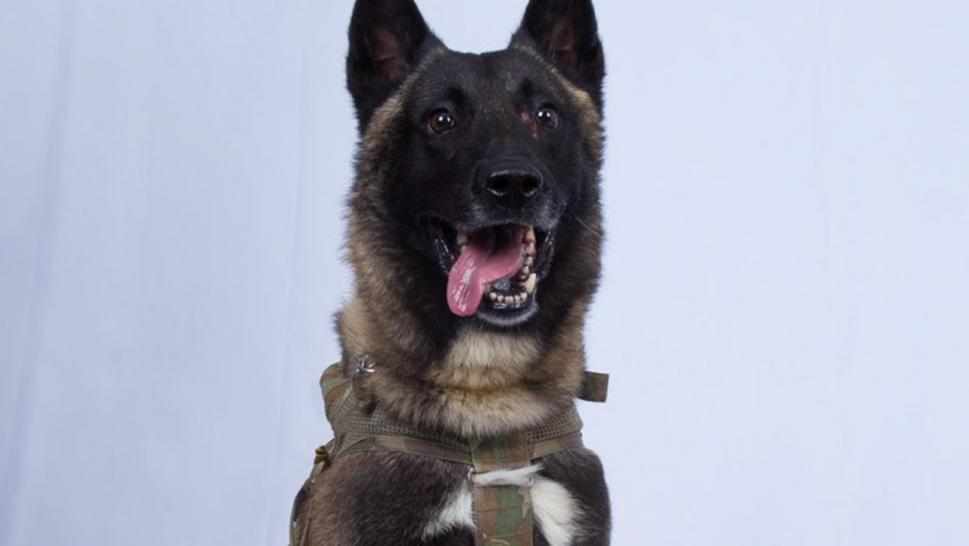 The Delta Force dog that cornered the leader of ISIS has become America's favorite animal.
