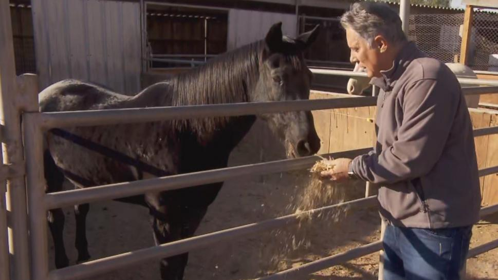 Inside Edition tracked down the hero horse named Prieta at a ranch in Simi Valley.