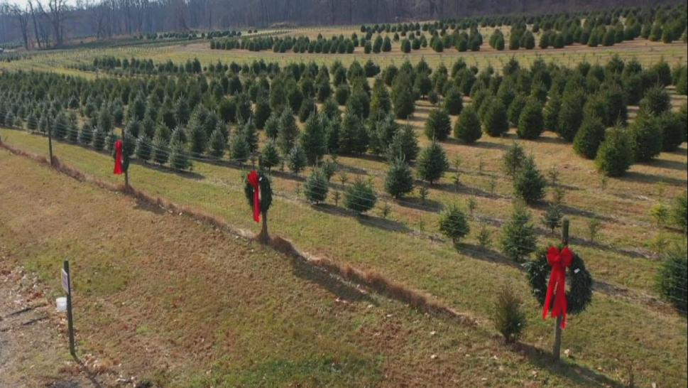 """Artificial trees are made with petroleum, they last in a landfill for a thousand years,"" Christian Nicholas, president of the New Jersey Christmas Tree Growers Association, told Inside Edition."