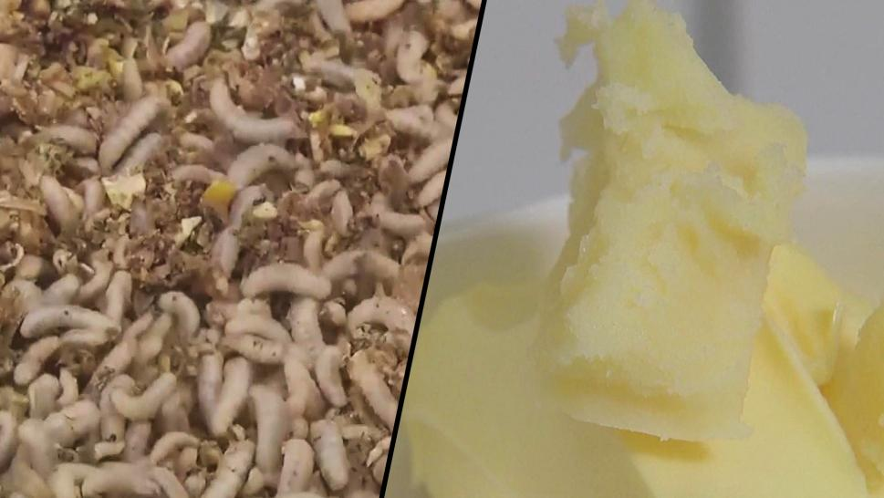 Butter made from insect fat