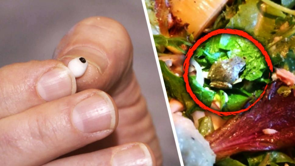Weird things found in food