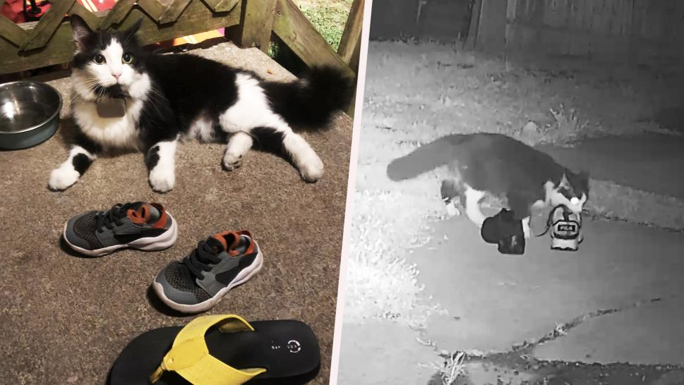 A cat who steals shoes