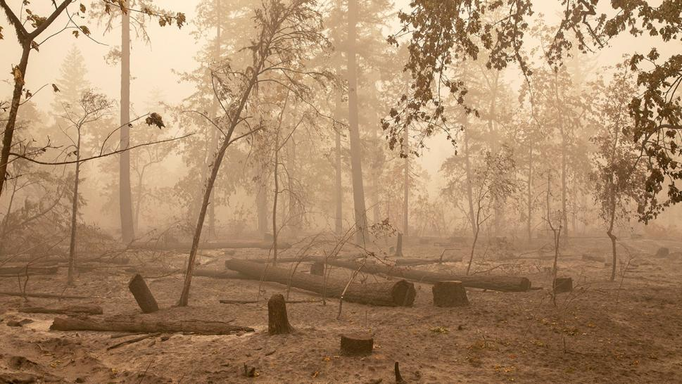 Devastation of the wildfires
