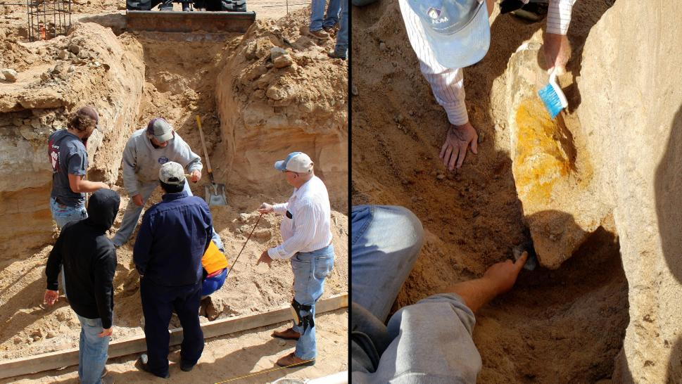 Mammoth bones discovered