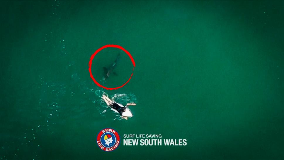 Shark Gets Dangerously Close to Surfer in Australia
