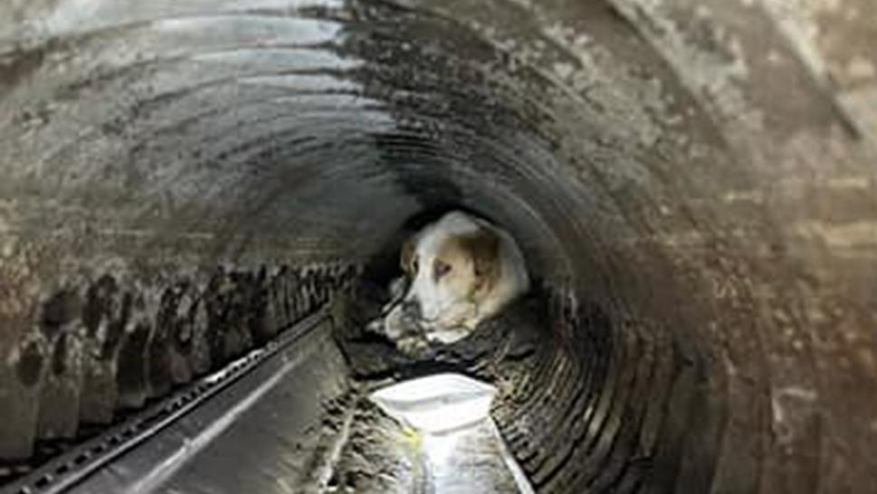 The St. Johns County Fire Rescue saved a deaf and visually impaired pup from a drainage pipe.
