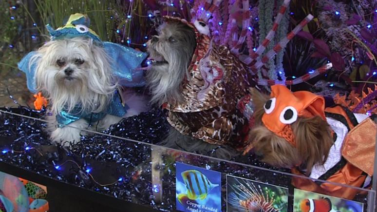 Three pups dressed as exotic fish in an aquarium.
