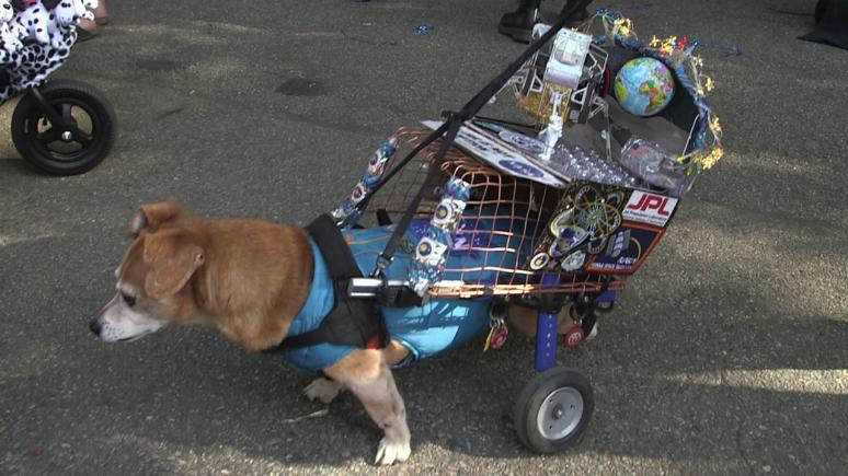 A pup that relies on his two front legs had his wheelchair transformed into a space station, complete with official badges from NASA.