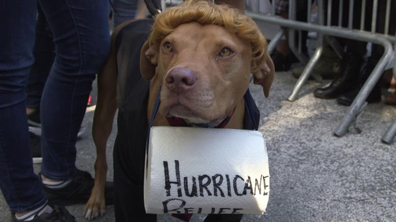 "A dog wearing a blond wig holds a paper towel roll with the words ""Hurricane Relief"" written across the front."