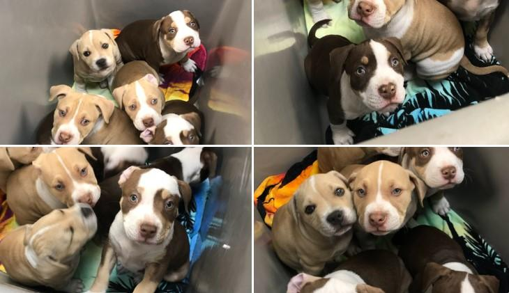 These pups are available for adoption in Nebraska.