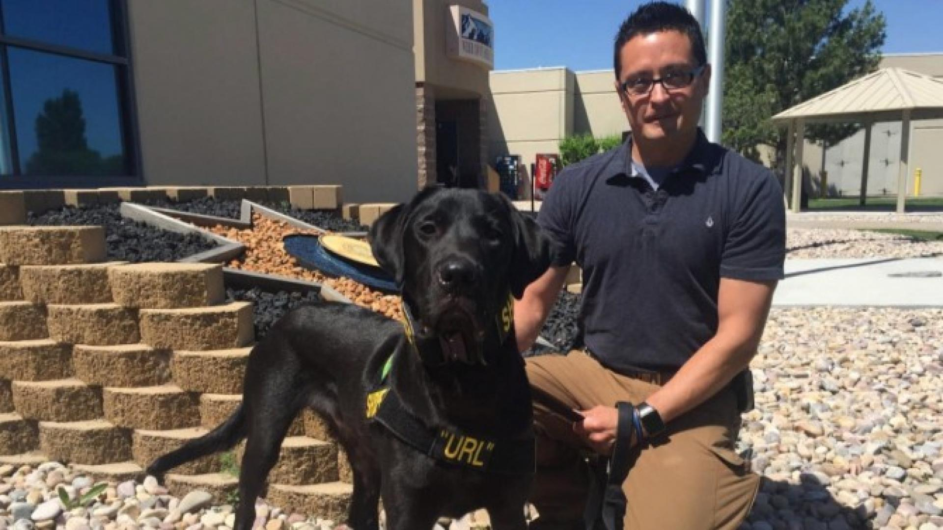 Porn Dog Hd porn-sniffing dog becomes first electronic detection k9