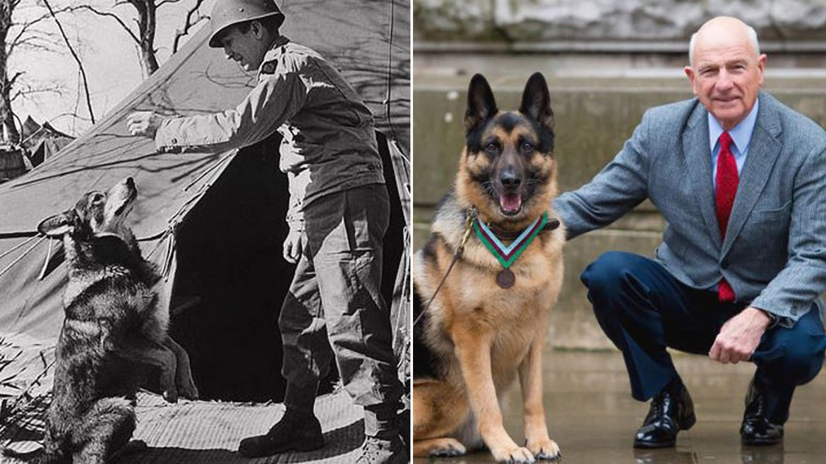 Chips, a WWII service dog, gets highest animal bravery honor.