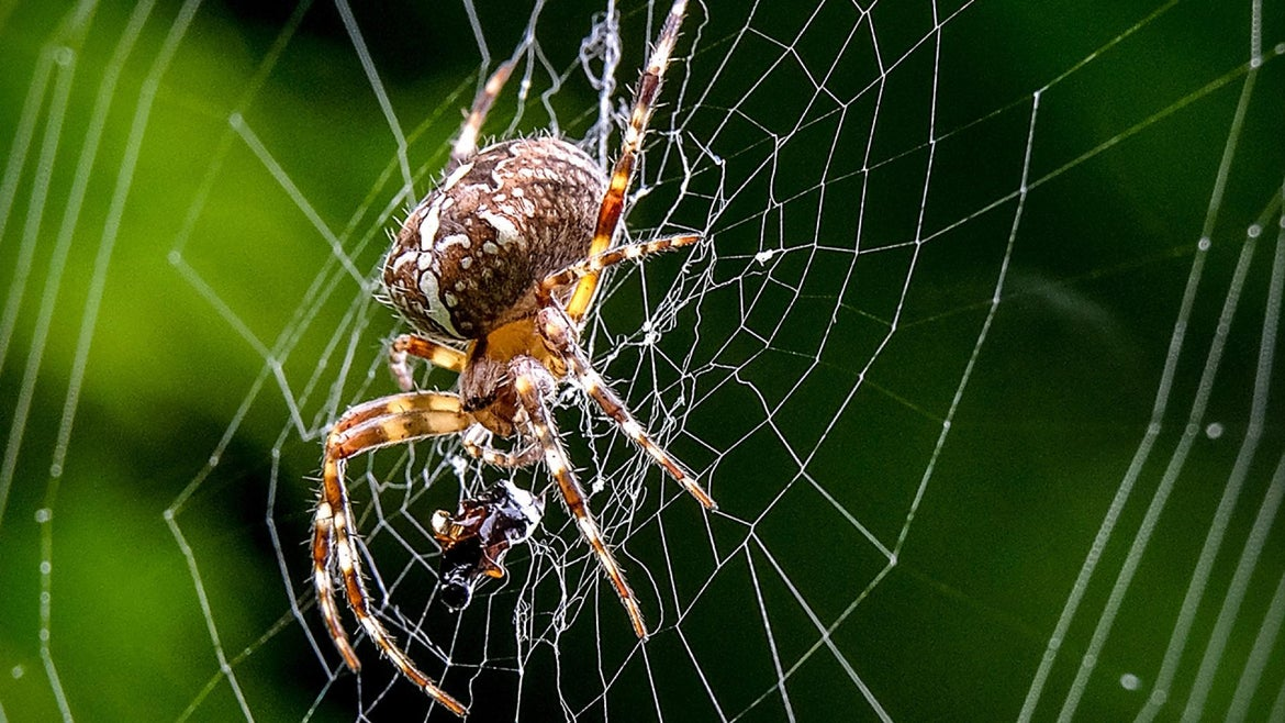 It appeared the motion sensors that trigger the music were being set off by spiders crawling across the site's security cameras' lenses.