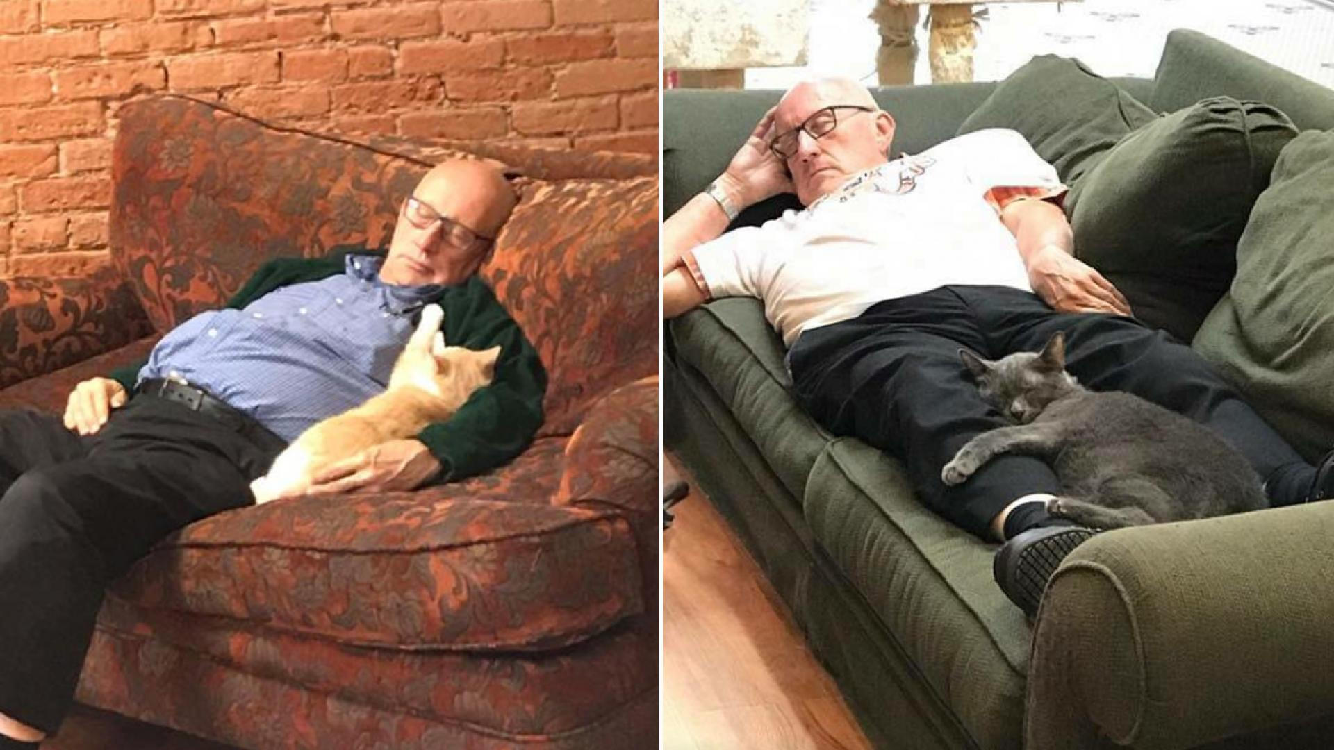 Terry naps with cats