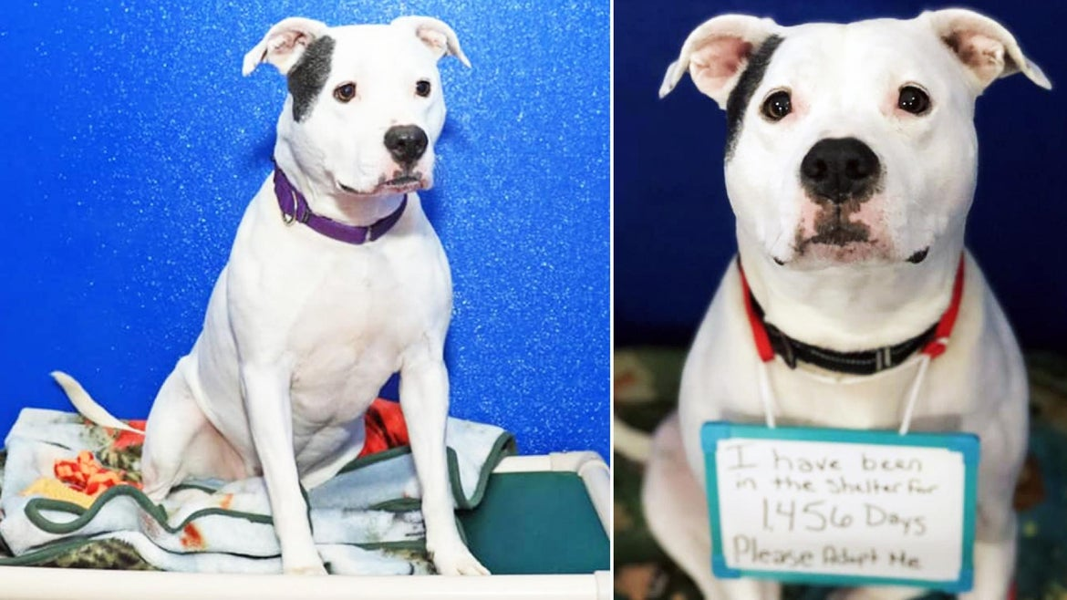 Ginger is still looking for a home, after spending four years at a shelter.