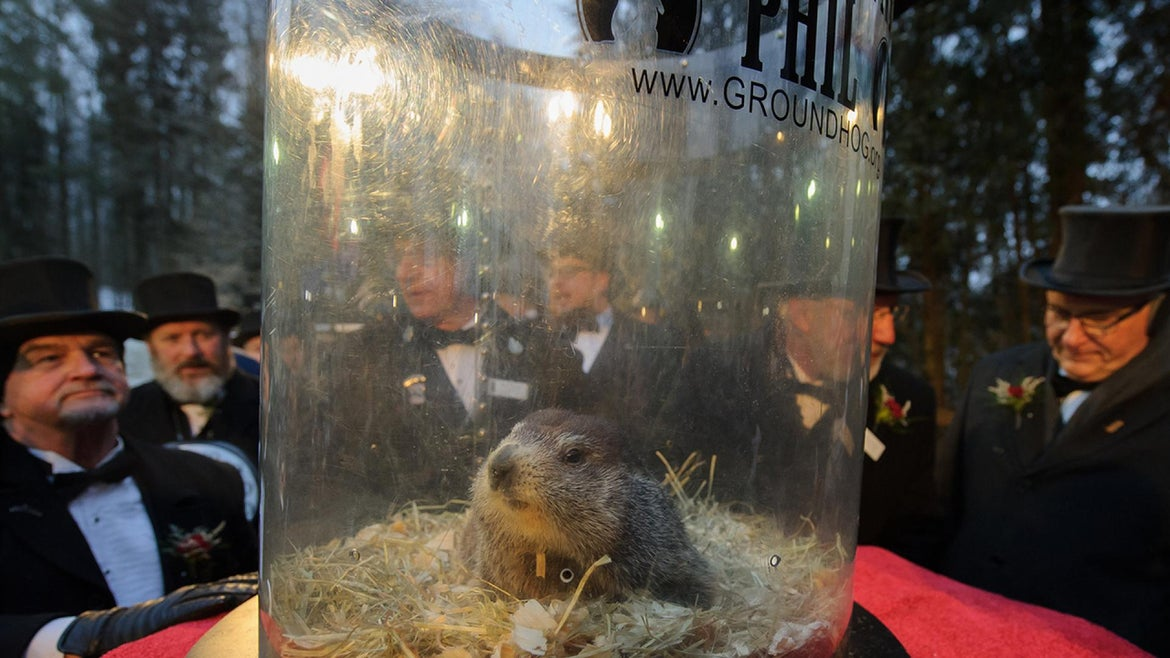 Punxsutawney Phil did not see his shadow when hecame out of his burrow at at Gobbler's Knob in Punxsutawney, Pennsylvania, where thousands had gathered to celebrate Groundhog Day.