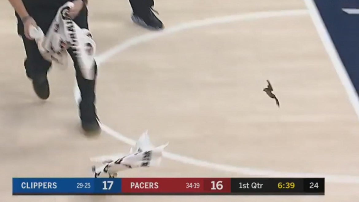 After a bat invaded an Indiana Pacers game last week, health officials are urging people who may have come into contact with the animal to seek medical attention.