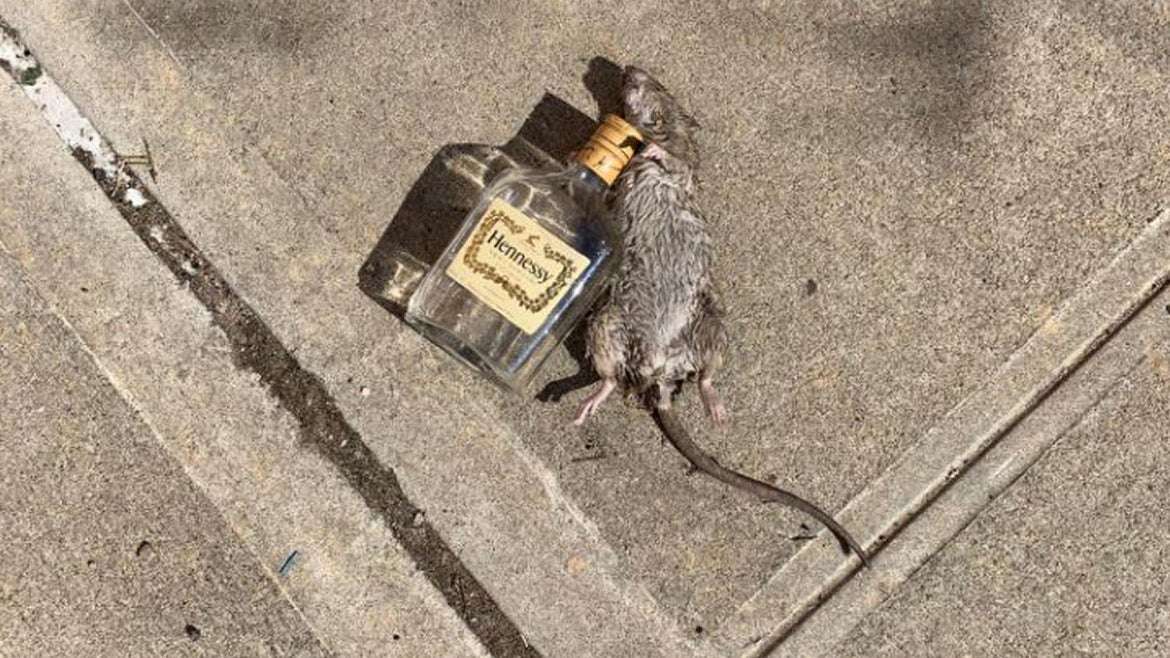 """""""Henny Rat"""" captured the internet's attention."""