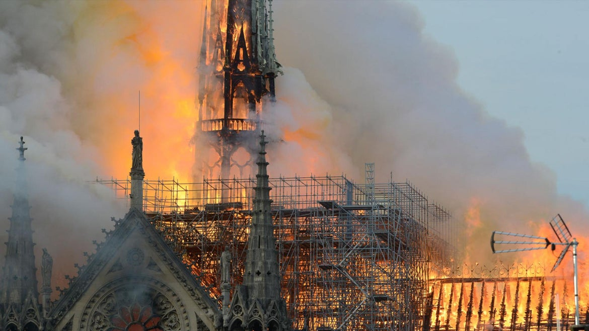 Nearly 200,000 Bees Survive Notre Dame Fire