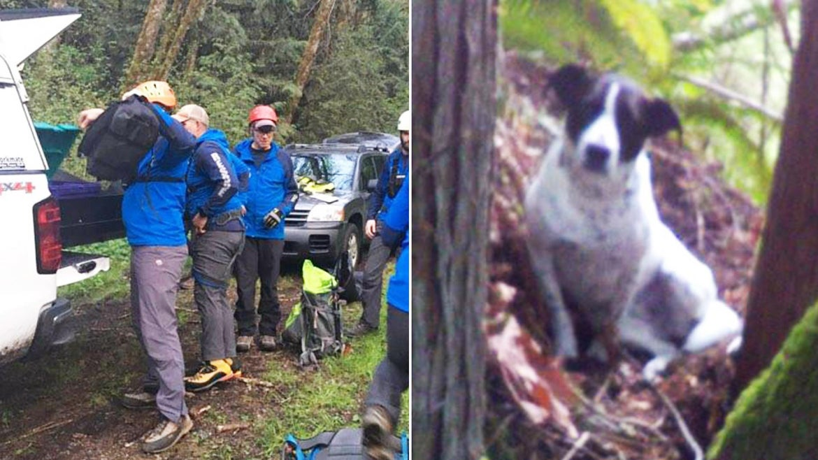 Daisy sat patiently by her owner's side until authorities came.