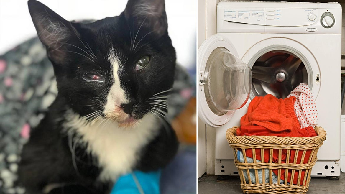 Poppy the 6-month-old kitten gets caught in a front-loading washing machine.