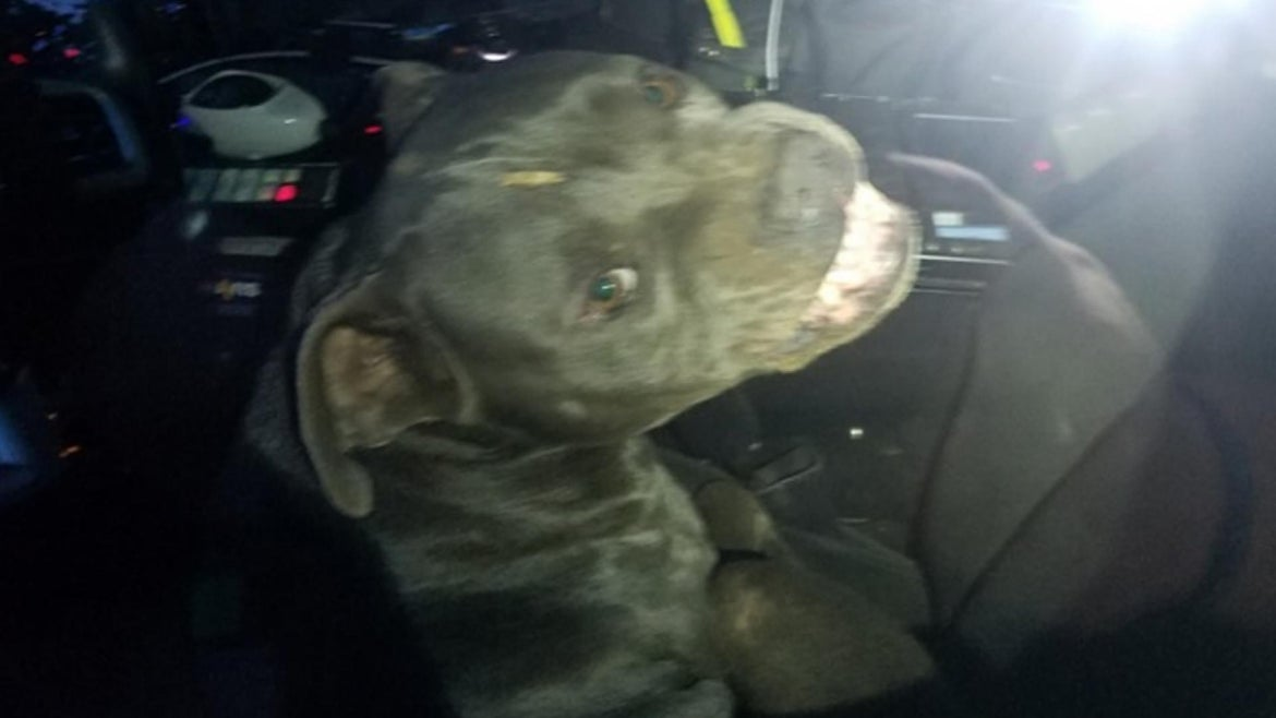 """A Texas officer dispatched to deal with a stray dog got more than he bargained for when the pup """"hijacked"""" his cruiser."""
