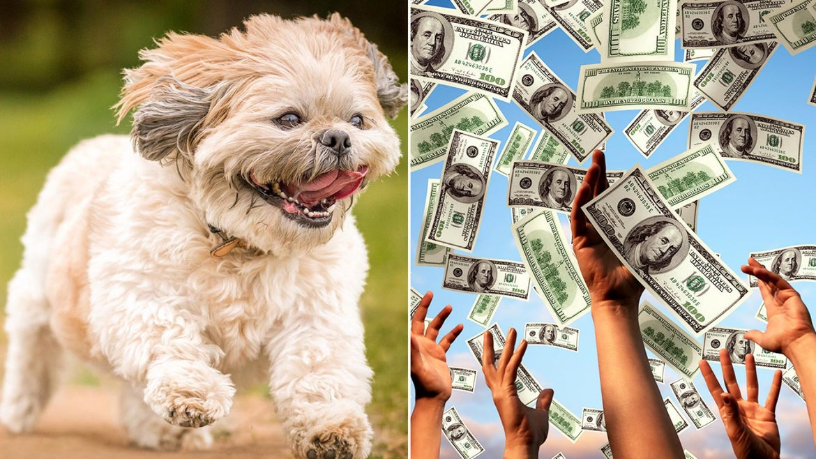 A North Carolina man thanked his shih tzu for helping him win the lottery.