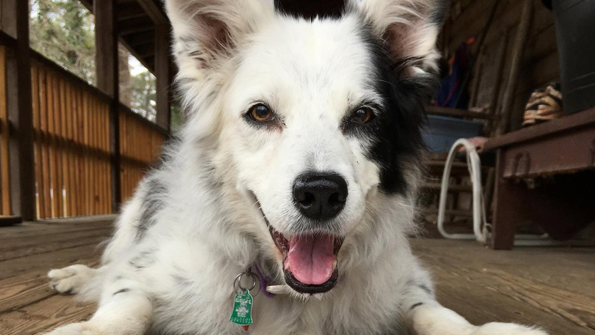 Chaser, known as the smartest dog in the world, died on July 23.
