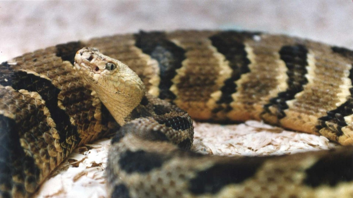 An Oklahoma man was arrested after officers found an open container of whiskey, a gun, a rattlesnake and uranium in his car.