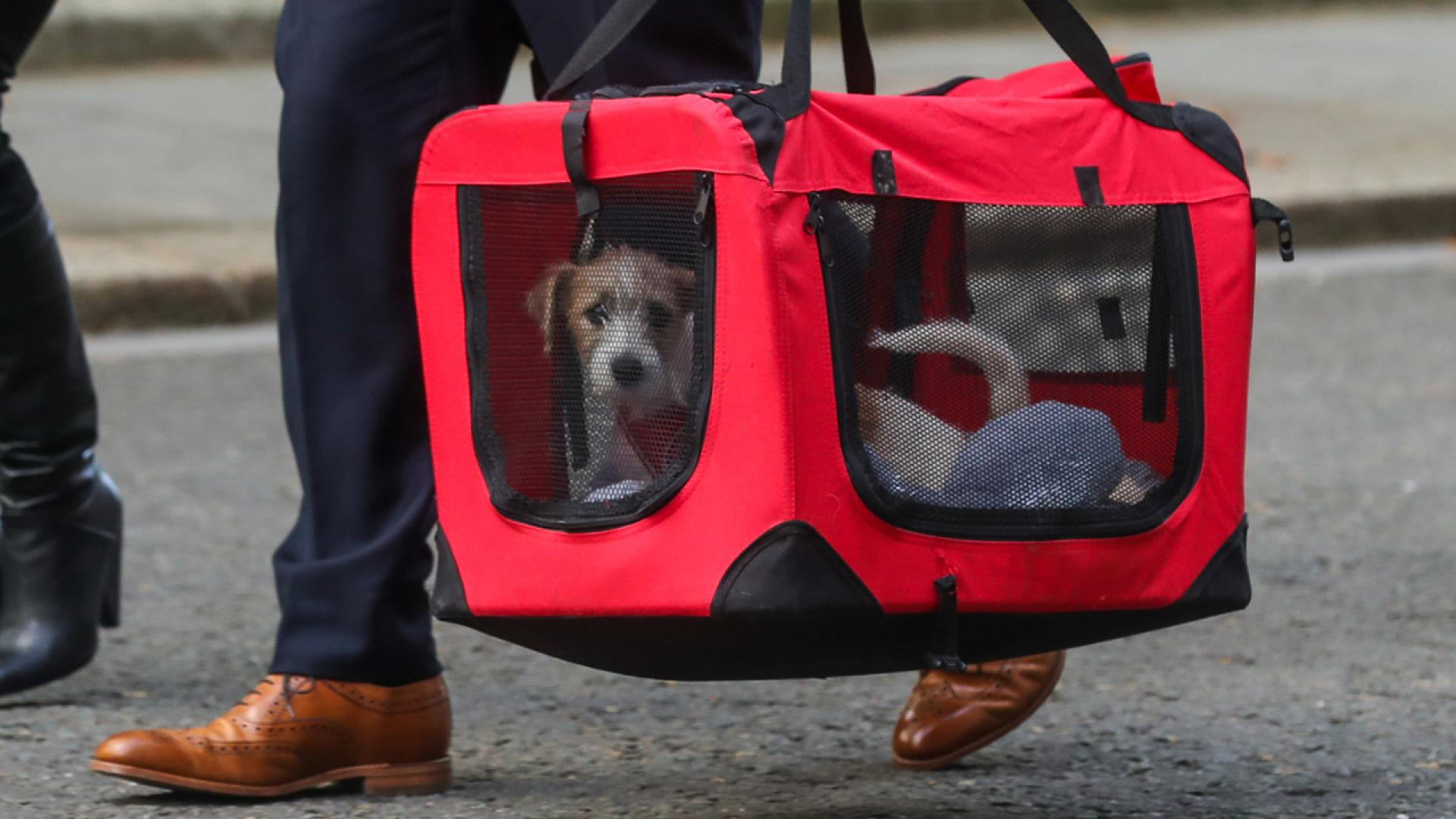 Dilyn the dog goes to No. 10
