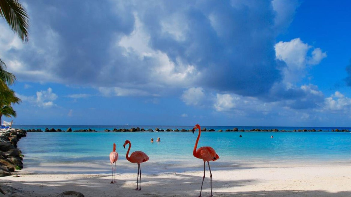 Island flamingos was one of the visions promised to travelers, they say.