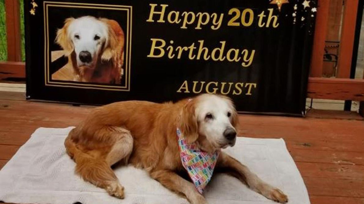 August the golden retriever turned 20 this year.