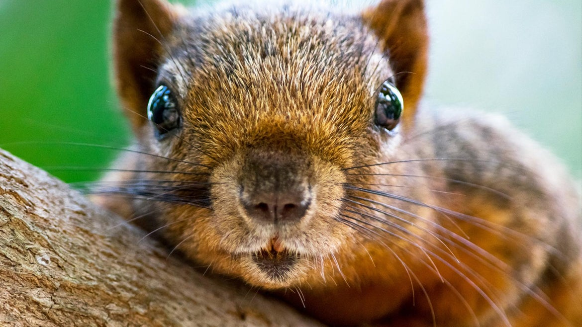 Health officials are warning locals to take extra precautions now that a squirrel has tested positive for the bubonic plague.