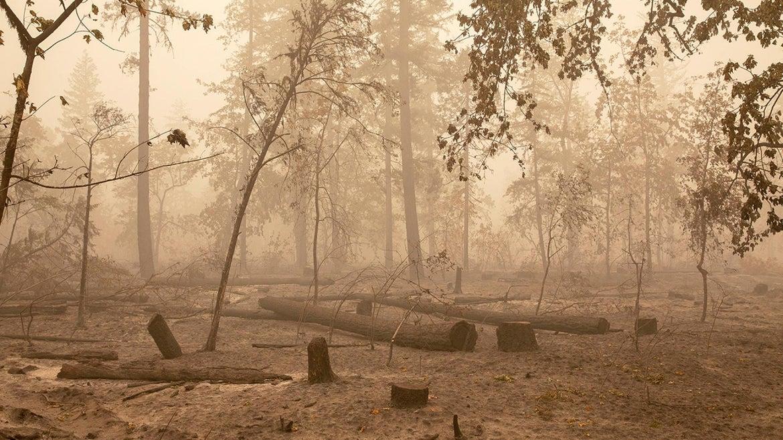 Devastation of the wildfires