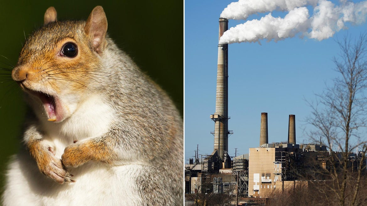 A squirrel scurried over a Dominion Energy transformer, causing black outs in Columbia, South Carolina.