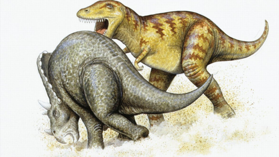 A depection of a T-Rex and triceretops dueling.