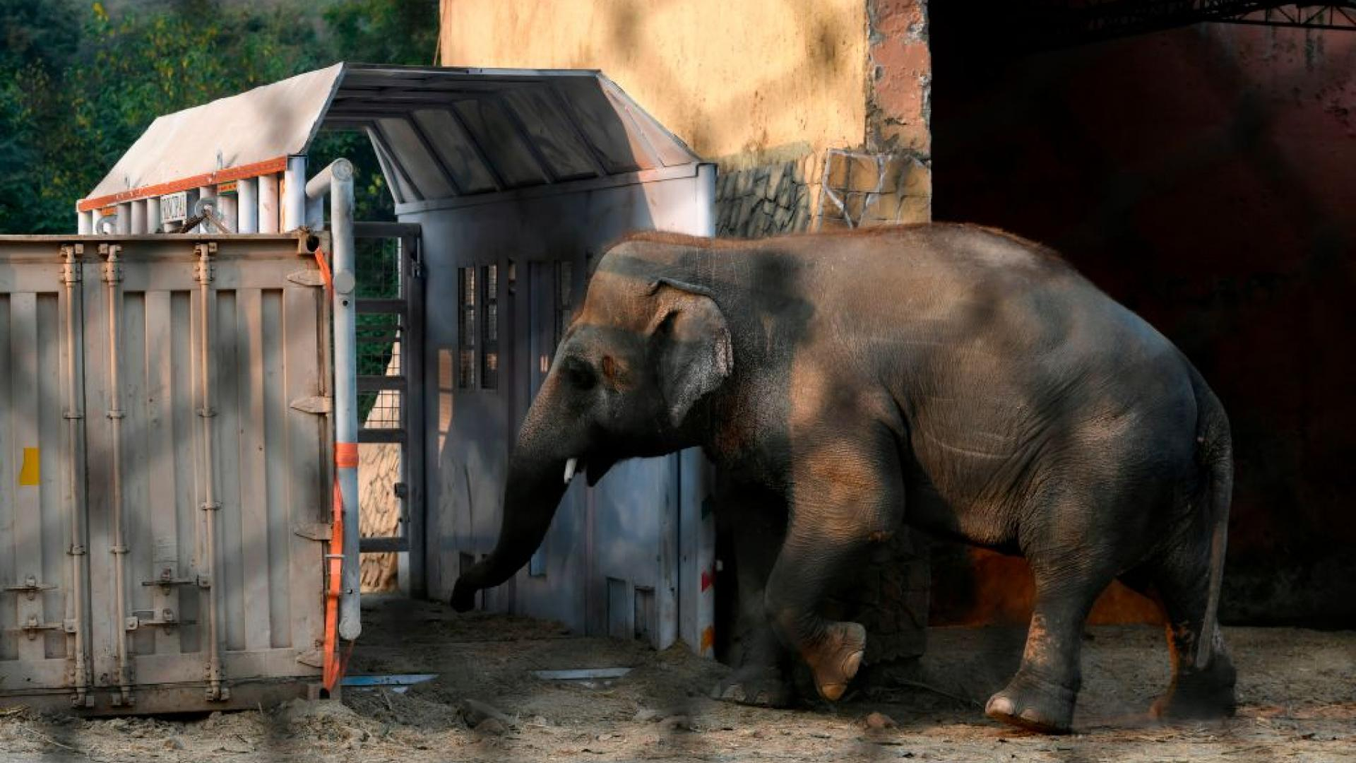 The World's loneliest elephant is headed for a new home.